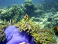 anemone1_big